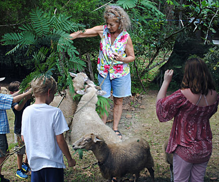 kids pulling mimosa for sheep
